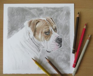 coloured pencil dog drawing